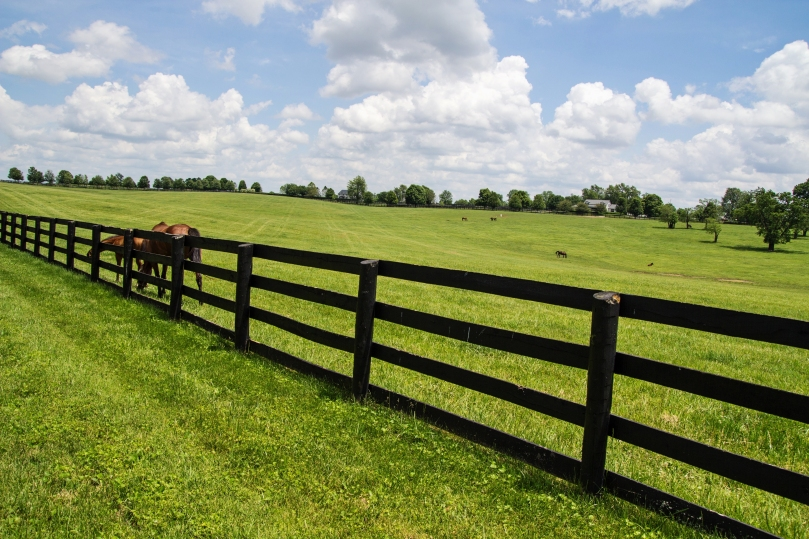 Kentucky Bluegrass